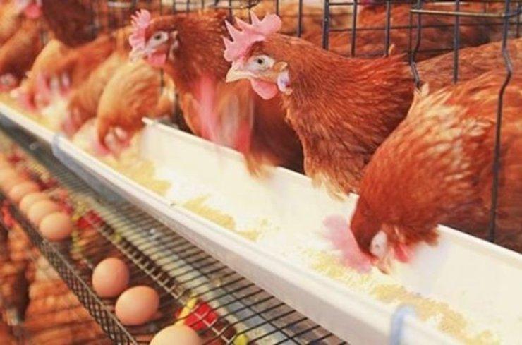 رویکرد اقتصاد مقاومتی بازار مرغ و تخممرغ را نجات میدهد