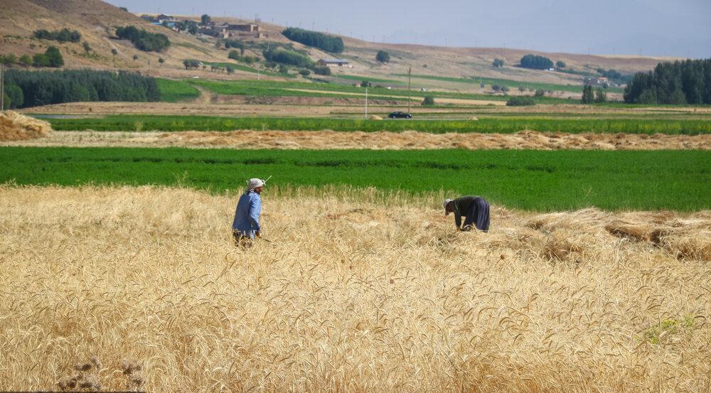 «کشاورز کارت»؛ کمکرسان خرده مالکها