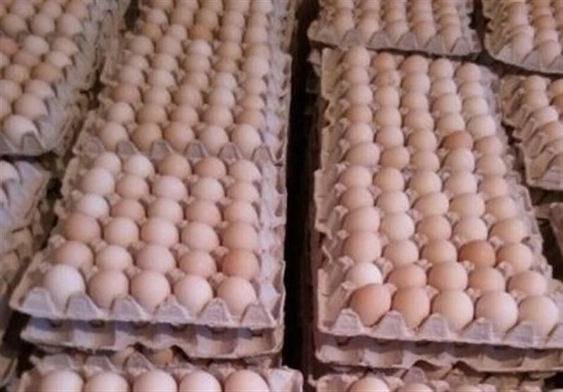 گرانفروشی تخممرغ در خردهفروشیها با وجود کاهش قیمت در مرغداریها