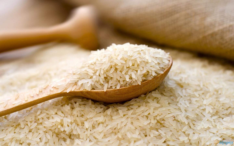 برداشت برنج رتون از شالیزارهای مازندران آغاز شد