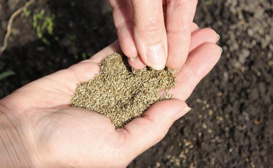 پیشبینی افزایش ۳۵ درصدی تولید بذر گواهی شده سبزی و صیفی در کشور