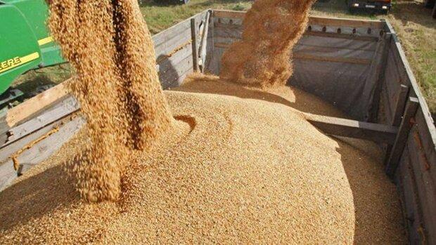 اشکالات سیستم توزیع هزینه واردات کالاهای اساسی را افزایش میدهد