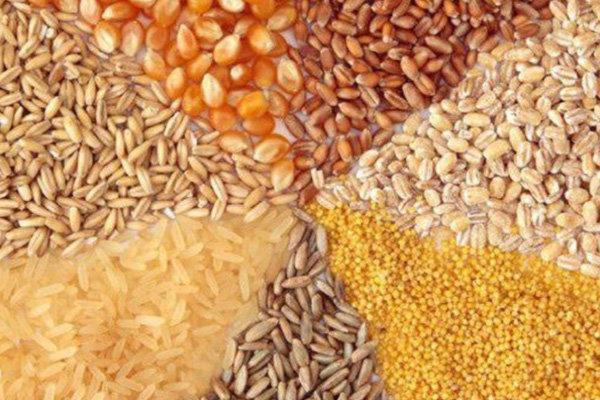 فزایش قیمت خوراک دام و طیور به بیشترین میزان 6 سال گذشته