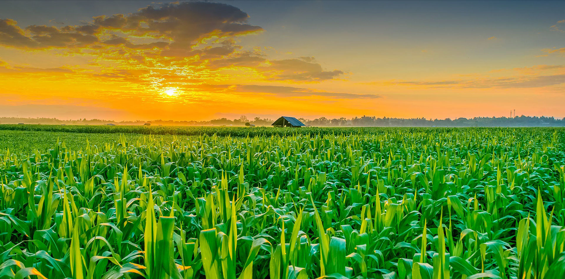 تولید 130 میلیون تن محصول کشاورزی در سال 99