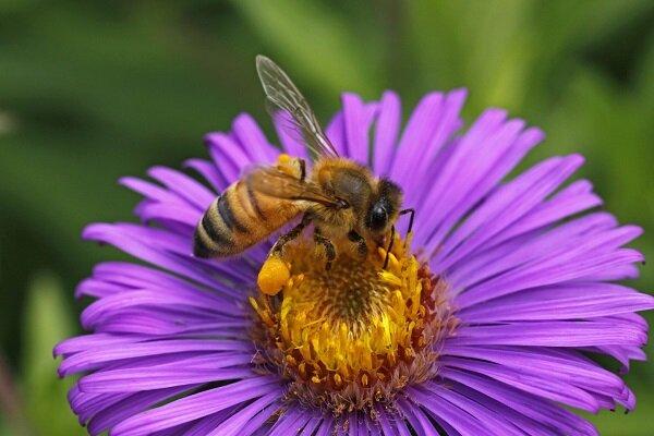 اختصاص 17 هزار تن شکر برای زمستان گذری زنبورداران کشور