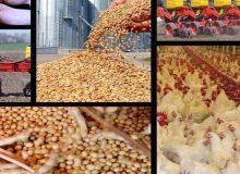 کاهش وزنی واردات نهادههای دامی به ۱۱ درصد رسید
