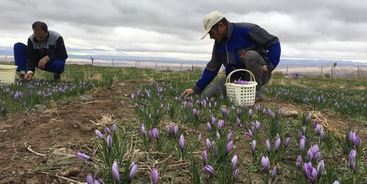 محقق شدن توسعه کشاورزی صنعتی با توانمندسازی نظامهای بهرهبرداری