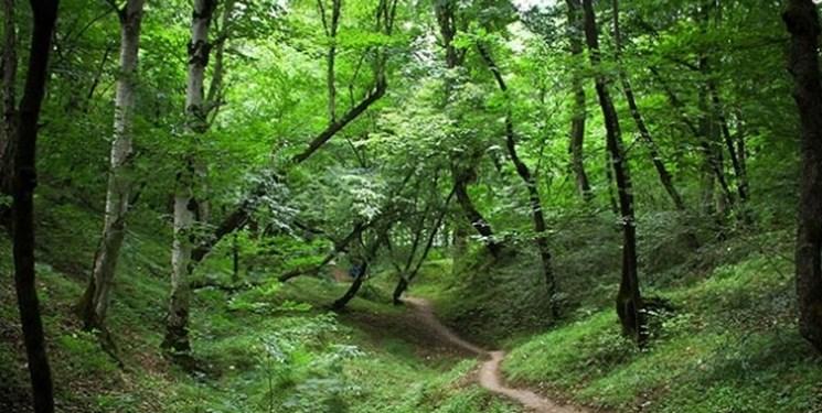 اقدامات حفاظتی در جنگلهای هیرکانی تشدید میشود