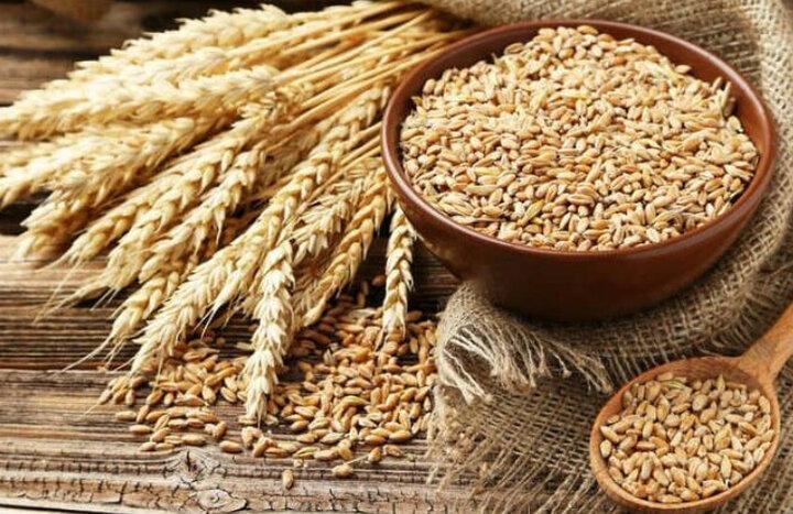 واردات گندم به دو برابر قیمت داخلی