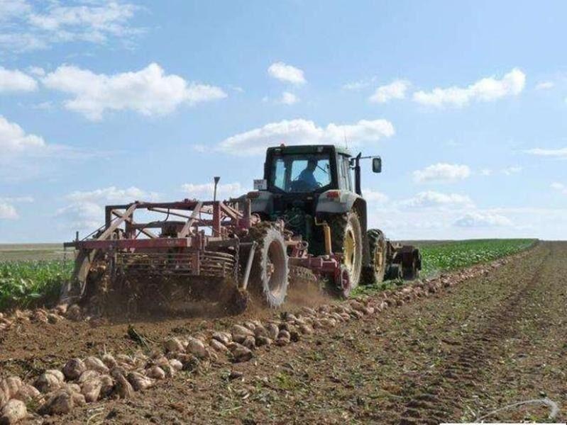پیشبینی تولید ۱.۱ میلیون تن چغندرقند پاییزه در سال زراعی جاری