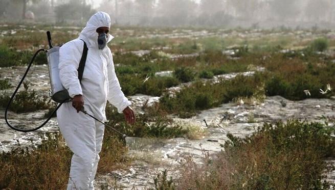 ۶۳۰۰ هکتار مبارزه با آفت ملخ صحرایی انجام شد
