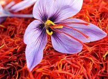 79 درصد زعفران به پنج کشور صادر شد