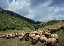 پیشنهاد تشکیل شورای ملی برای ساماندهی کوچ و جلوگیری از چرای زود هنگام در مراتع