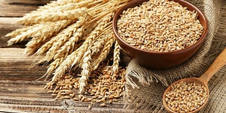 تولید ۱۰ میلیون تن گندم قطعی است