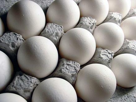 صادرات تخممرغ ممنوع نیست