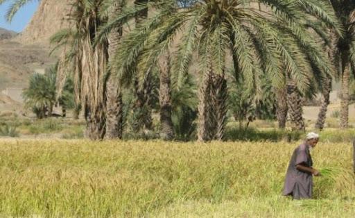 خوزستان حاصلخیز چگونه به استانی خشک تبدیل شد؟