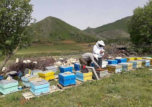 مستثنی شدن زنبورداران همانند عشایر از اخذ «کد شناسه یکتا»