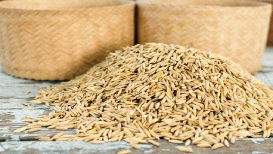 ۴ هزار تن بذر برنج امسال در کشور تولید می شود