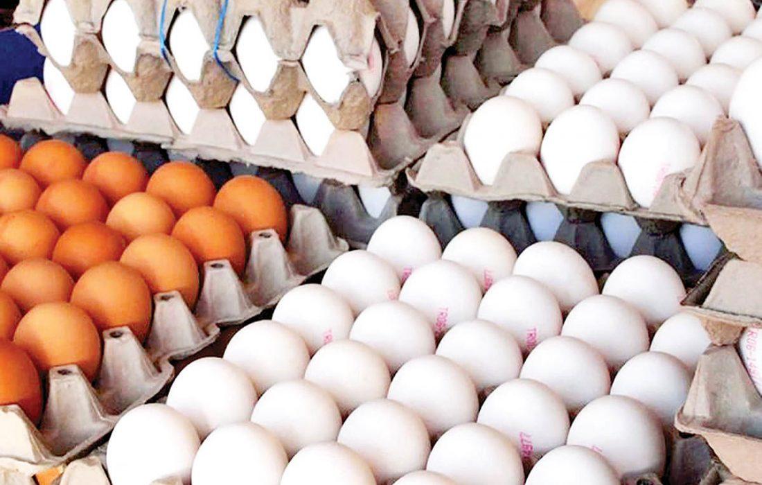 عرضه گسترده تخم مرغ با قیمت شانهای ۴۲۵۰۰ تومان از امروز