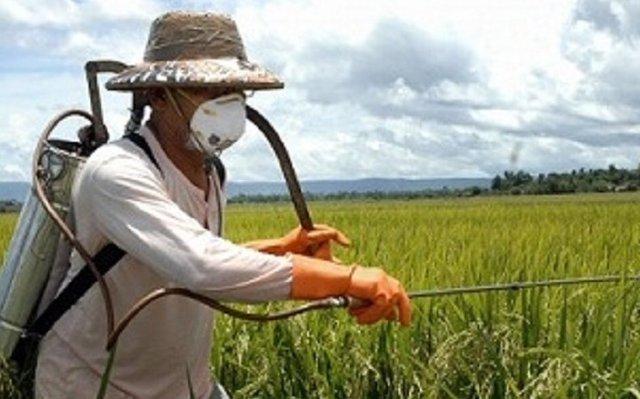 مسئولان موضع خود را درخصوص واردات و تولید سم مشخص کنند