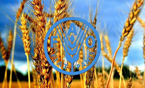 مصرف غذای آلوده سالانه بیش از ۴٢٠ هزار نفر را در جهان میکشد