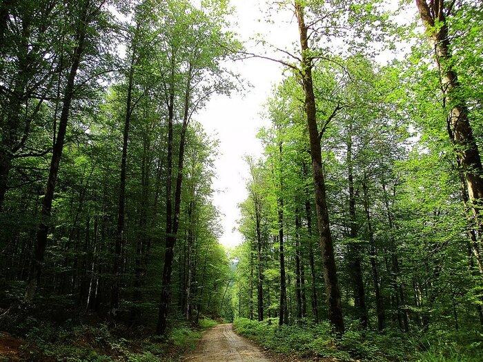 ضرورت انجام اقدامات مدیریتی و حفاظتی در جنگلهای هیرکانی