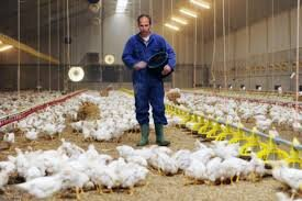 مرغداران مرغ احتکار نمیکنند