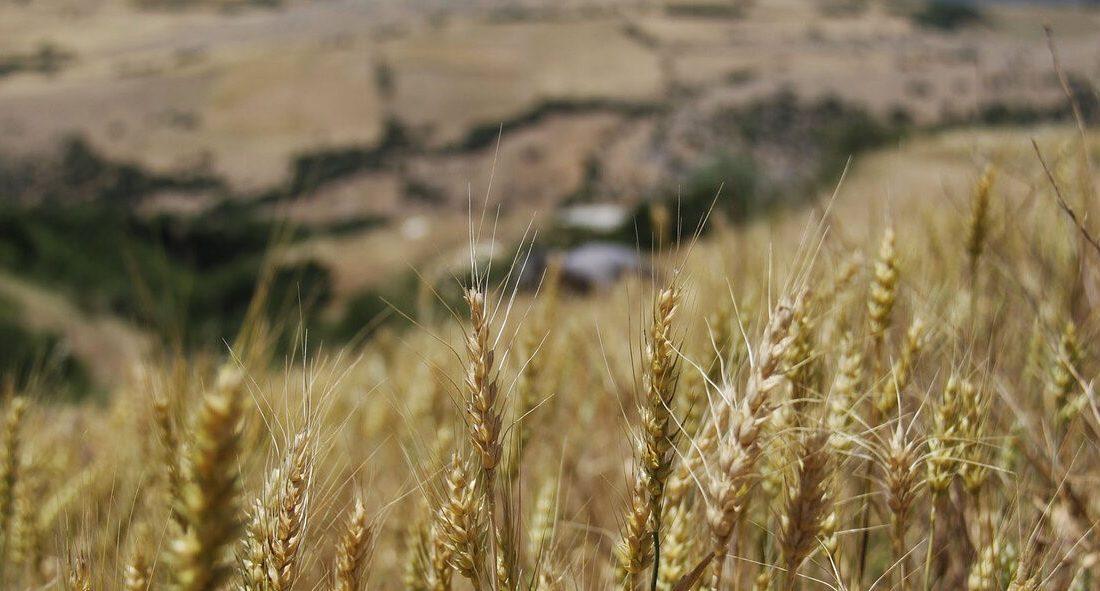 رشد ۸۲ درصدی اعتبار طرح حمایت از محصولات کشاورزی در بودجه ۱۴۰۰