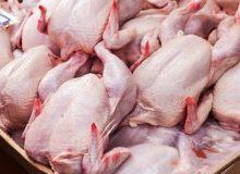 واردات ۵۰ هزار تن گوشت مرغ به گمرک ابلاغ شد