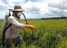 کمبود منابع مالی در جهاد کشاورزی برای کنترل باقیمانده سموم