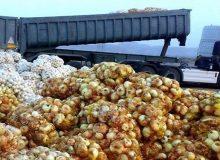 ۶۸ هزار تن پیاز کشاورزان هرمزگان و جنوب کرمان خریداری شد