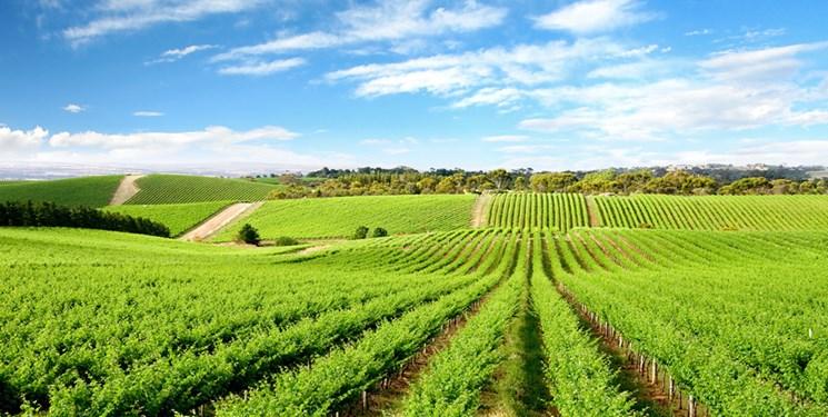 موافقان و مخالفان طرح رفع موانع تولید کشاورزی چه میگویند؟