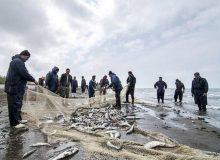 صید 11 هزار تن ماهی استخوانی در دریای خزر