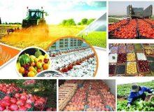حمایت کشاورزان از طرح تقویت امنیت غذایی کشور