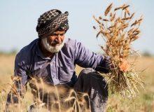 ویژگیهای وزیر جهاد کشاورزی در دولت سیزدهم
