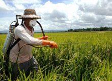 هشدار سازمان حفظ نباتات برای مبارزه به موقع با آفات در شرایط خشکسالی