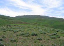 پیشبینی کاهش ۴ میلیون تنی تولید علوفه مرتعی بر اثر خشکسالی