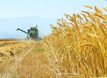 خرید ۱.۱ میلیون تن گندم کشاورزان توسط شبکه اتحادیه تعاون روستایی