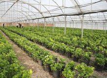 کنترل آفات انباری، حلقه فراموش شده مدیریت عوامل خسارتزای گیاهی