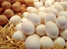 اعلام قیمت مصوب تخممرغ بستهبندی