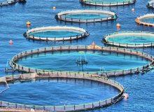 پرورش ماهی در قفس دریا نیازمند رشد سرمایهگذاری